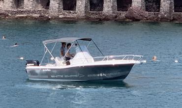 WHITE SHARK 206